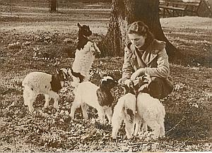 Baby Goats & Shepherd Bergere France Old Photo 1954