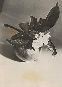 Flower & Fruit Apple Still Life Study Old Photo 1953