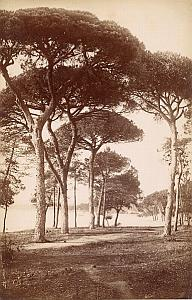 French Riviera Cannes Panorama Garden Pine Trees Old Jean Gilletta Photo 1880'