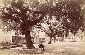 French Riviera Nice Cemetery Gardens Old Jean Gilletta Photo 1880'