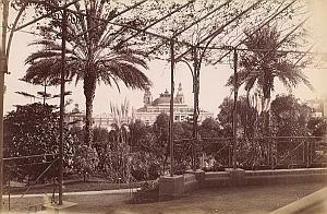 French Riviera Monte Carlo Casino Palm trees old Jean Gilletta Photo 1880