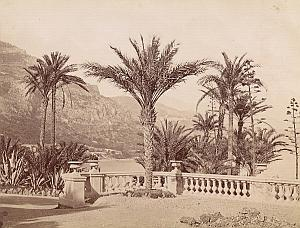 French Riviera Monte Carlo Gardens Palm Trees old Jean Gilletta Photo 1880'