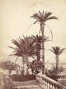 French Riviera Monte Carlo Gardens Palm Trees Cactus Jean Gilletta Photo 1880'