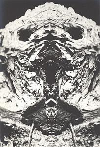 Stump Head Unusual Artistic Study Old Photo 1970'