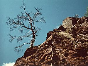 Dead Tree on Rocks Study Color Deplechin Photo 1970