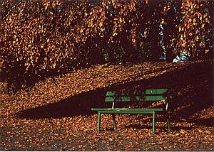 Garden Autumn Bench Study Color Deplechin Photo 1970