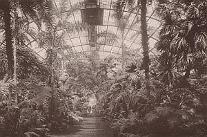 Frankfurt Palmengarten Garden Germany Old Photo 1890