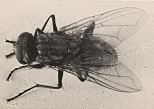 Fly Study France amateur old Snapshot Photo 1930