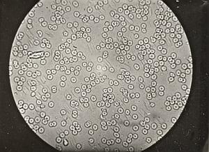 MacroPhotography Science Study Snapshot 1920