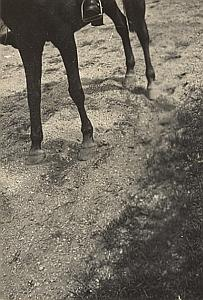 Equestrian Study France Misfire Snapshot Photo 1947