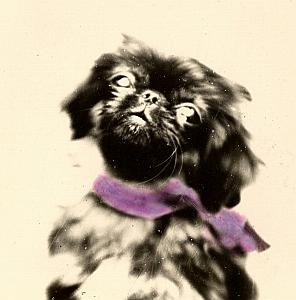 Dog France Instantaneous Colored Snapshot 1930