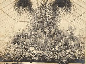 Orchid Fern Anchorage Greenhouse USA Photo 1925