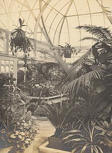 Orchid Anchorage Greenhouse Botanical USA Photo 1925