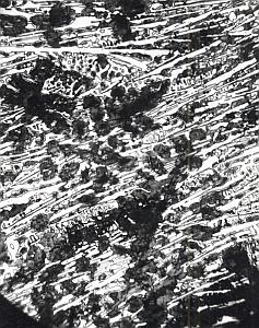 Metallography Iron Steel Study France MicroPhoto 1960