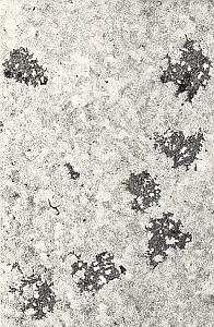 Metallography Iron Steel Study France Micrograph Abstract Photo 1960