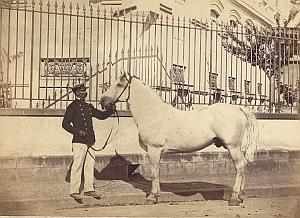 Horse Agricultural Exhibition Colmar Old Cabinet Card Photo Adam 1867