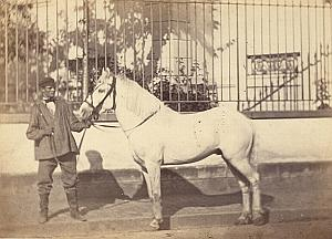 Horse Agricultural Exhibition Colmar Photo CC Adam 1867
