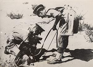 British Palestine Mines Demining Dog Old Photo 1946