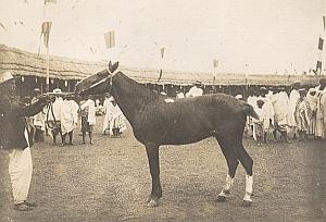 Horse Breeding Madagascar Old Diez Photo 1924