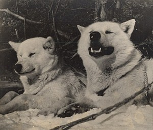 Maine WWII Arctic Dogs US Army Airfield Presque Isle Photo 1943
