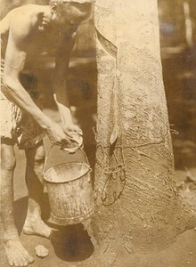 Indochina Bien Hoa Rubber Growing Old Photo 1926