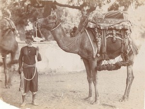 India Camel Decorated Saddle Old Photo 1890