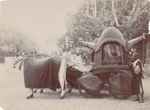 India Rajasthan Prestigious Bullock Cart Old Photo 1890