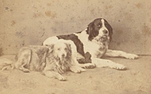 France Toulouse Dogs the Two Friends Old Photo CDV ca 1865