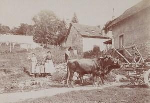 Ox Cart Aix les Bains Street Scene Snapshot Instantaneous Photo 1900