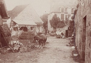 Bagnoles de l Orne Spa Town Cows Farm Scene Snapshot Instantaneous Photo 1900