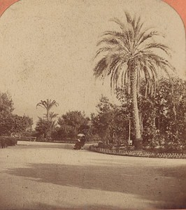 Nice Palm Tree of the Annexation France Old Stereo Photo Lucchesi 1880