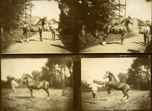 Country Life Training Horse France Old Snapshot photo 1900