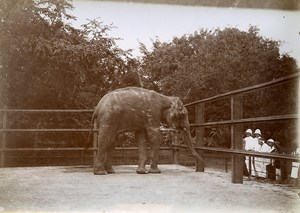 Saigon Elephant Botanical Garden Tonkin Vietnam Old Photo Tong Sing 1895