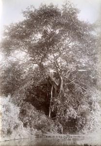 Banyan Road Ban Roi to Lang Son Tonkin Vietnam Old Photo Tong Sing 1895