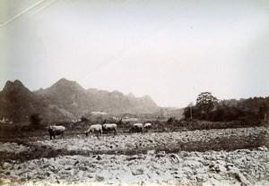 Phu Binh Gin Plain Cai Kinh French Tonkin Vietnam Old Photo Tong Sing 1895