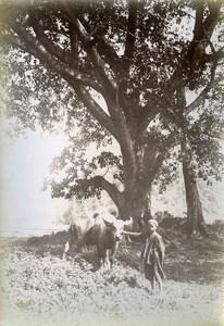 Phu Binh Gia Boy & Buffalo Cai Kinh Tonkin Vietnam Old Photo Tong Sing 1895