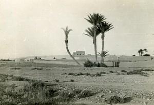 Morocco Marrakech Enter the Palm Grove Old Photo April 1947
