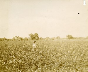 Madagascar Majunga Cotton Plantation of Mr Billaud old Photo 1900