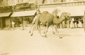 France Angouleme Camel Circus parade Old Photo H Billard 1893