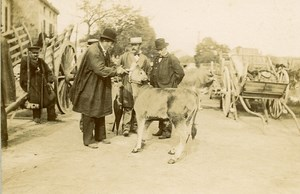 France Angouleme Market Scene Calf Old Photo H Billard 1893