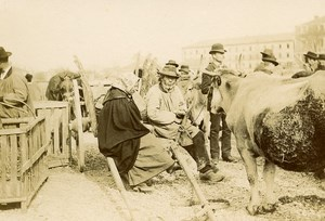 France Angouleme Market Scene Cattle Old Photo H Billard 1893