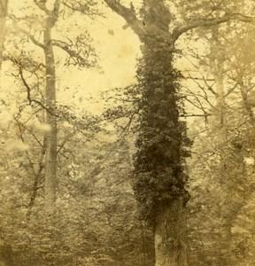 France Paris Trees Study Old Half Stereo Photo 1860