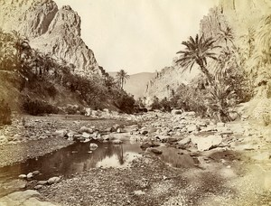 Algeria Sahara Oasis Old Photo 1890