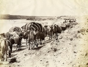 Algeria Sahara Desert Camels Caravan Old Photo Neurdein 1890