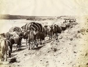 Algeria Sahara Desert Camels Caravan Old Photo Neurdein 1890