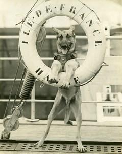 Ocean Liner Ile de France Dog Rintintin Old Photo 1930
