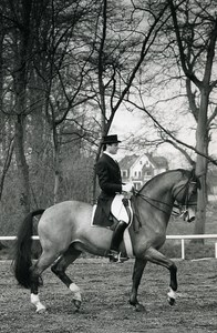Belgium Horse Piaffé Training Jan Bemelmans Old Photo Vanderhaegen 1980
