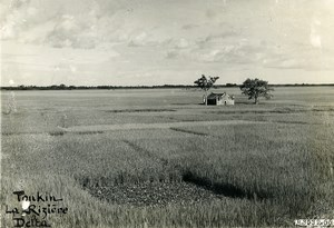 Vietnam Indochina Tonkin Hadong Rice fields before harvest Old Photo 1925