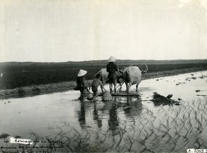 Vietnam Indochina Tonkin Kids Fishing Rice Field Harrowing Buffalos Photo 1925