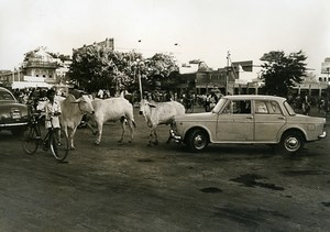 India Scene from Everyday Life Traffic Jam Cars & Cows Old photo 1960